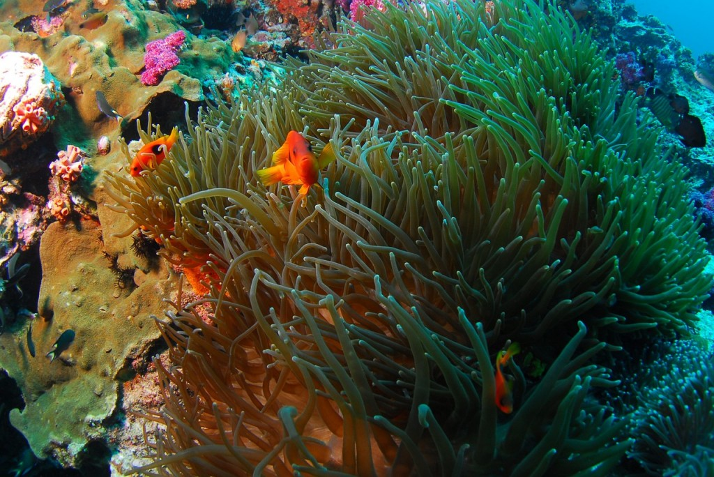 Scuba Diving in Puerto Rico: Tips and Trips