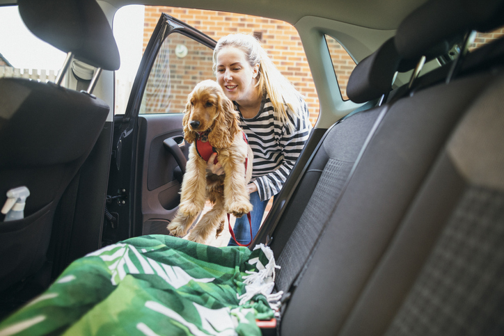 dog-in-car-in-puerto-rico
